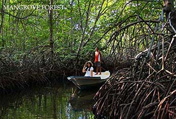 mangrove forest explore by canoe