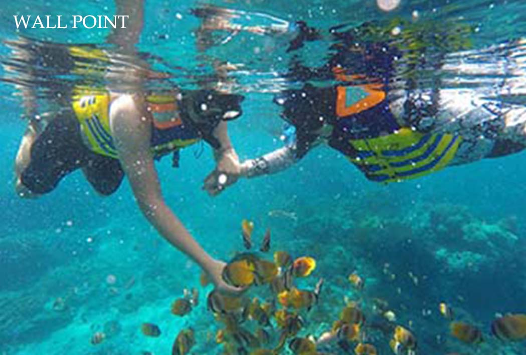 snorkeling wall point with manta